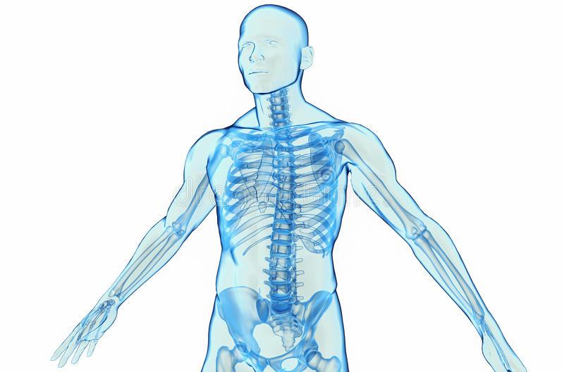 человеческое-тело-29451330