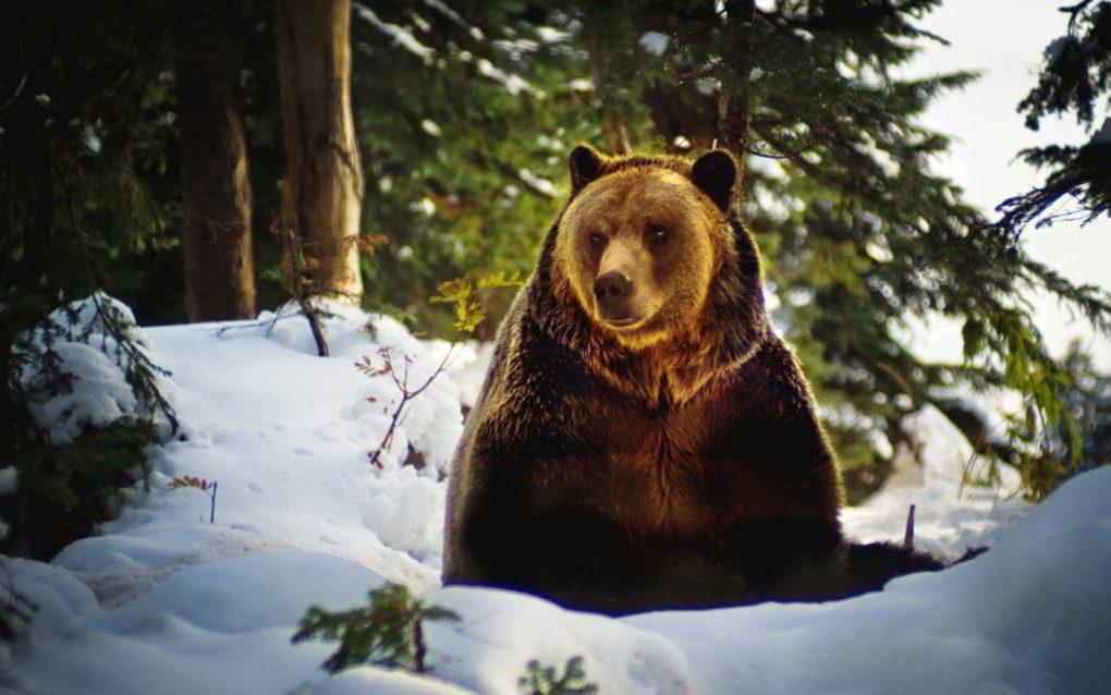kartinki24_ru_bears_86