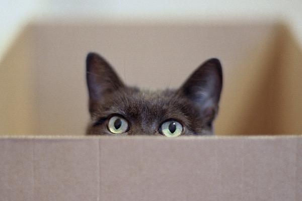 Кіт Шредінгера